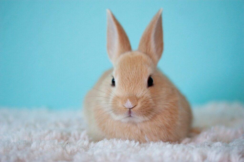 cute, baby, bunny