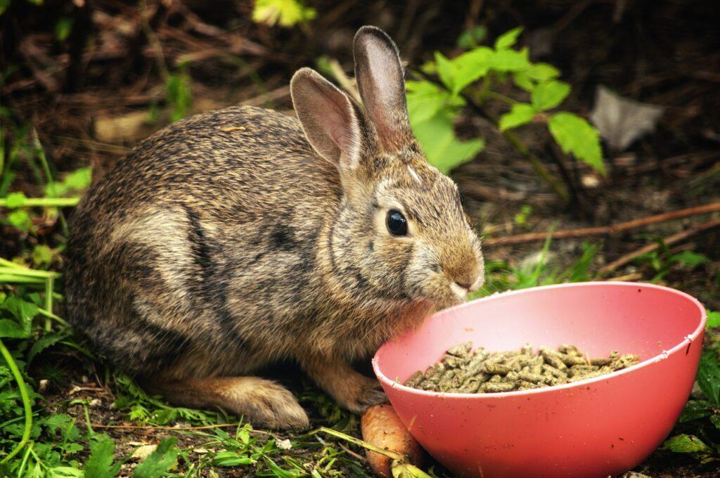 rabbit, food, eat